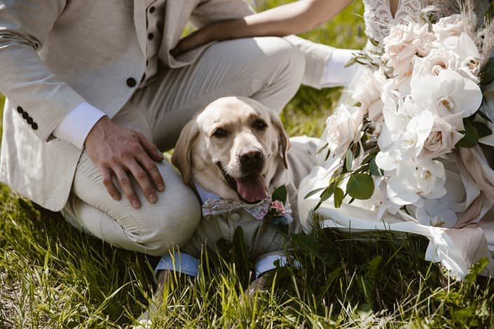Dog wearing a suit laying down between bride and groom.