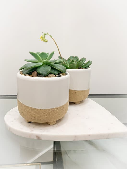 Succulent in footed beige pot