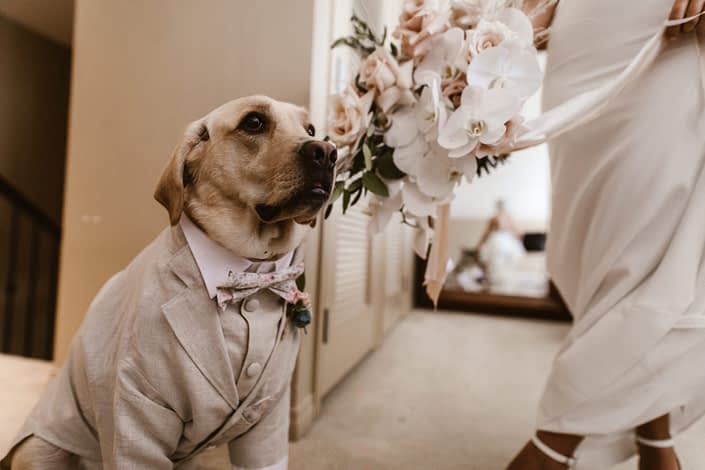 Dog wearing a suit and tie.