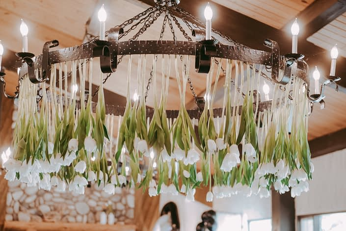 White dream tulips hanging from a chandelier.