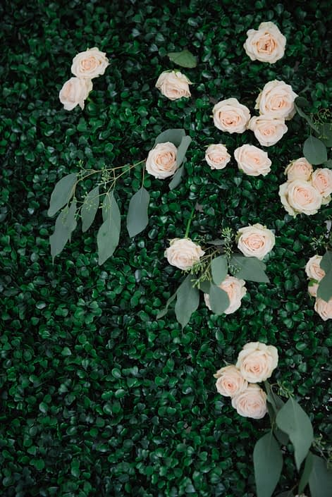 Boxwood backdrop with pale peach spray roses and eucalyptus
