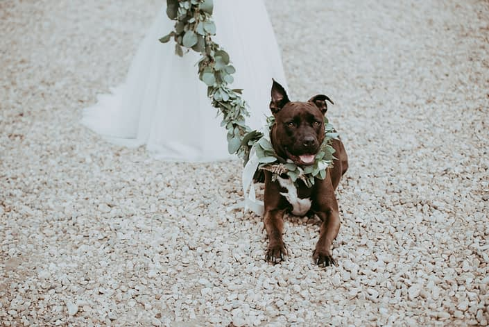 Dog collar and leash decorated with eucalyptus garland
